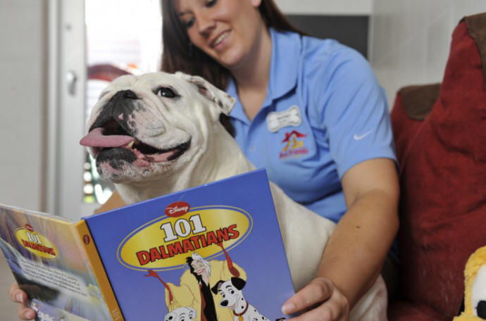 Walt disney world news best friends pet care at walt for Dog kennels near disney world
